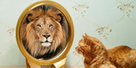 Кошка смотрит в зеркало и видит льва
